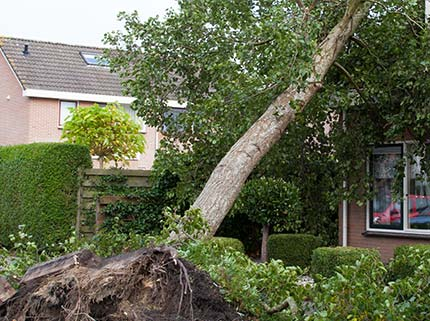 Tree fell onto a house