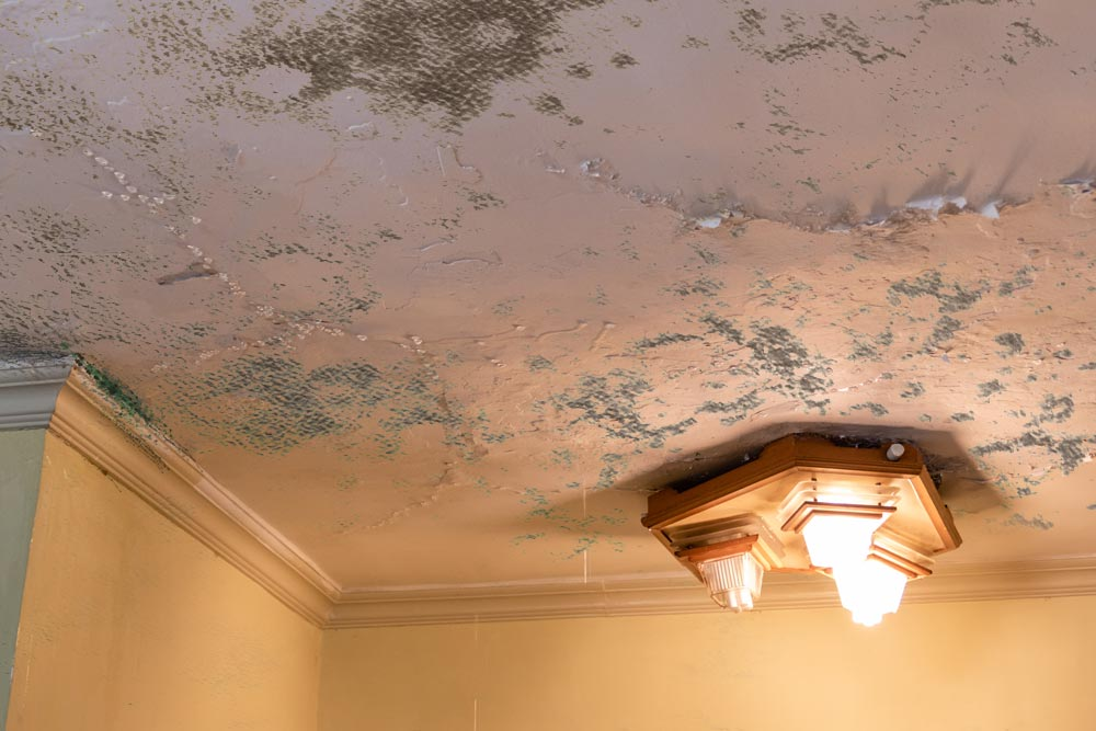 Moldy ceiling with light